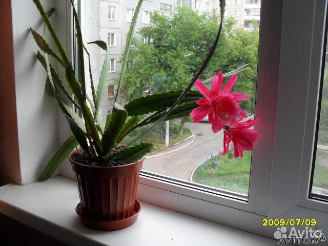 Как разводить розы в домашних условиях