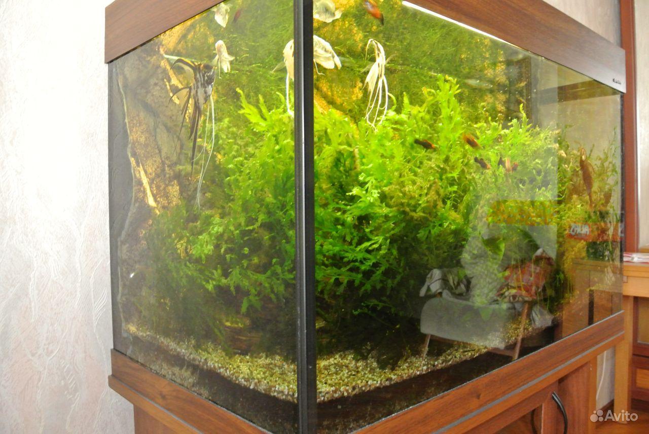 Продам аквариум AquaPlus PRO170 + ориг. подставка купить на Зозу.ру - фотография № 3