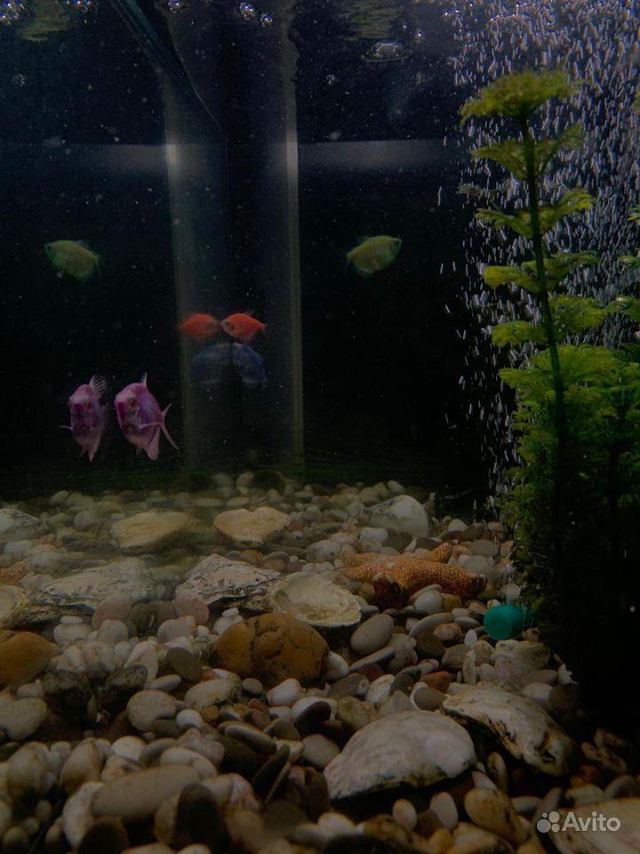 Рыбки тернеции купить на Зозу.ру - фотография № 1