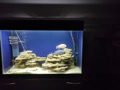 Продам аквариум 110л.с фильтрами