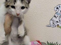 Котенок. Маленький пушисты комочек-мальчик