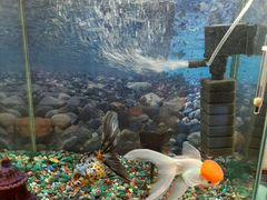 Продаётся аквариум с рыбками 40 литров