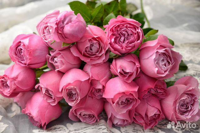 Ставрополь 101 роза доставка