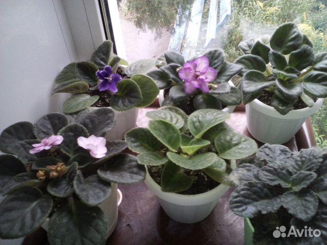 Авито брянск цветы комнатные