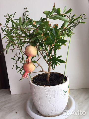 Авито владимир растения и цветы