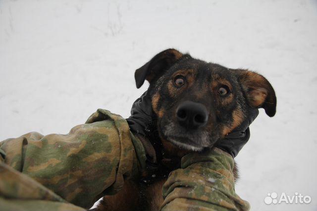 Собака в дар некрупная купить на Зозу.ру - фотография № 5