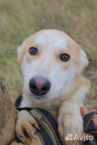 Чудесная собака подросток в дар купить на Зозу.ру - фотография № 1