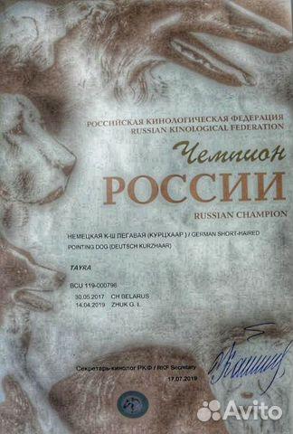 Щенки немецкого курцхаара купить на Зозу.ру - фотография № 6