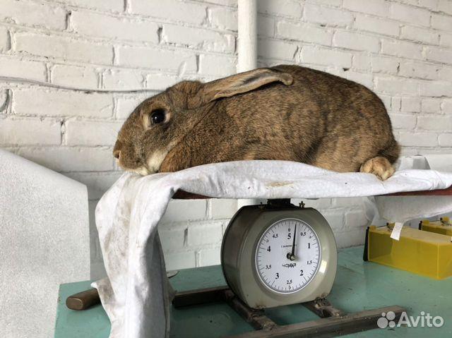 Кролики купить 3