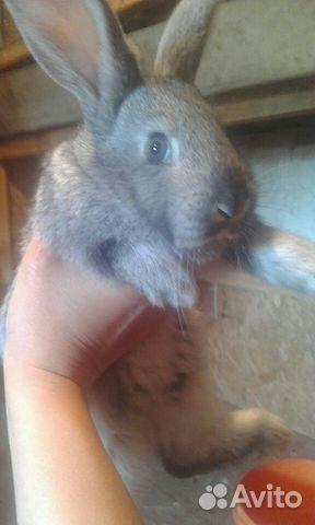 Крольчата купить 2