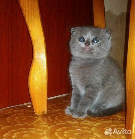 Породистые котята купить 2