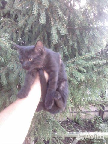 Котенок девочка  89397109841 купить 2
