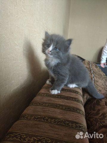 Котята озорнята  89502742399 купить 4