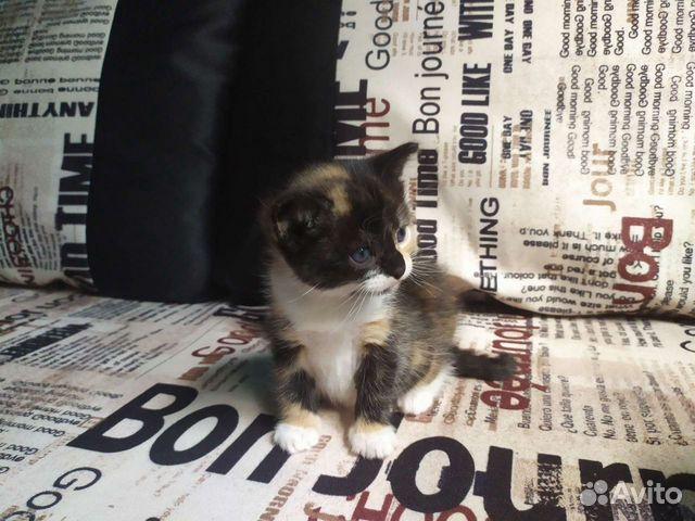 Kitty  89969229287 buy 2