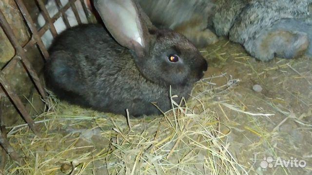 Кролики разных возрастов