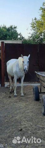 Лошадь  89187715500 купить 2