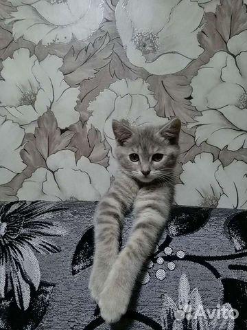 Кошка  89836968058 купить 4