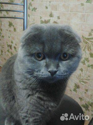 Отдам кота  89109182716 купить 4
