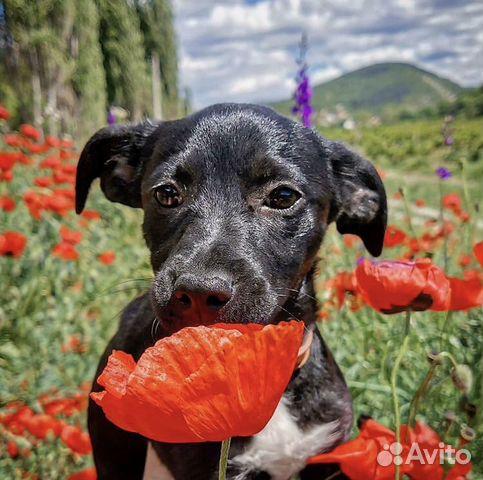 Собака  89788895624 купить 2
