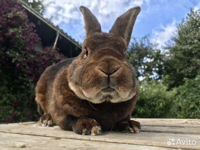 Кролики  89206193364 купить 1