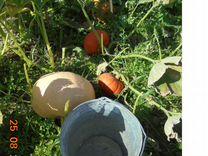 Овощи, ягоды, зелень свежие со своего огорода