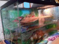 Продаю красноухую черепашку с аквариумом