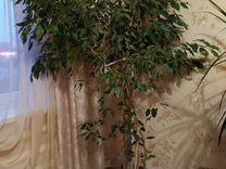 Домашнее растение — Растения в Саратове