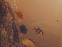Продам аквариум всвязи с ремонтом