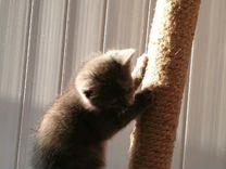 Серенекий котик