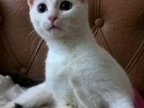 Котёнок 11 месяцев ищет верных и заботливых хозяев