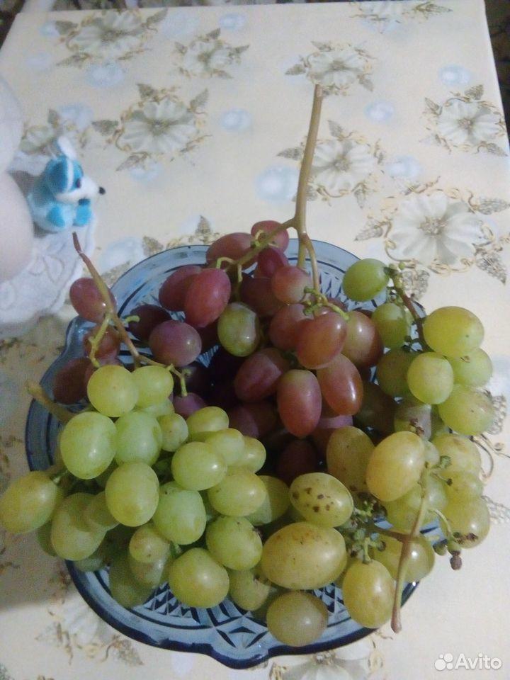 Черенки винограда  89531243354 купить 5