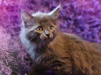 Котенок Сьюзи ищет дом