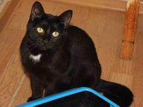 Кошечка Черничка ищет дом