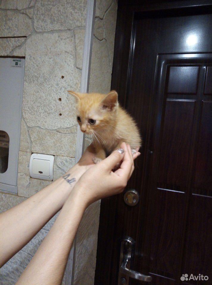 Котенок в добрые руки  89634909939 купить 1